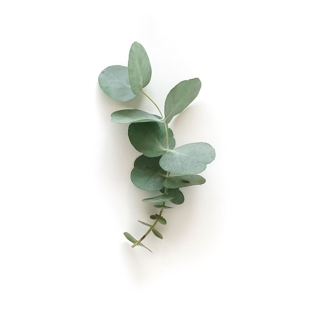 Eukalyptus lipure Inhaltsstoffe
