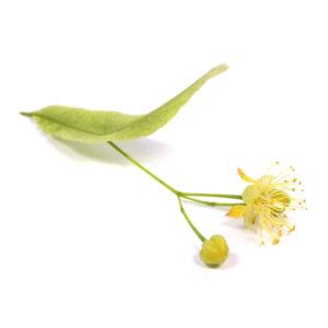 Lindenblüten lipure Inhaltsstoffe
