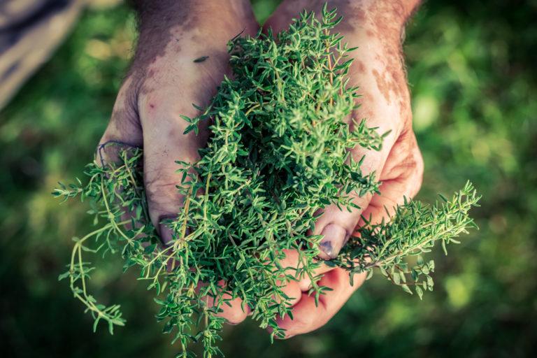 Wie werden Pflanzenextrakte hergestellt