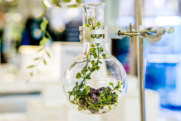 Extraktion der Pflanze